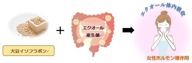 エクオール体内吸収