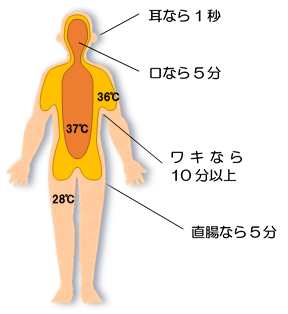 身体の内部温度分布